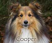 Viking des Bordes Rouges, dit Cooper
